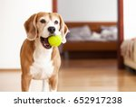 beagle dog with tennis ball... | Shutterstock . vector #652917238