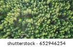 forest deciduous and coniferous.... | Shutterstock . vector #652946254