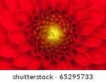 Close Up Photo Of A Red Dahlia...