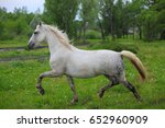 pura raza espanola  andalusian.... | Shutterstock . vector #652960909