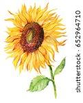 yellow flower of a sunflower on ... | Shutterstock . vector #652964710
