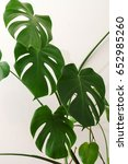 monstera plant | Shutterstock . vector #652985260