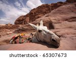 A donkey in Petra, Jordan - stock photo