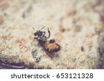 Small photo of bee writhe on the floor