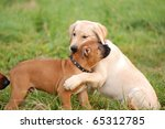 playing puppy's - stock photo