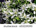 bouquet of white summer flowers   Shutterstock . vector #653239390