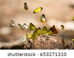 Stop Motion Of Butterflies Are...