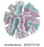 coral on white background | Shutterstock . vector #653273710