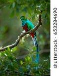 birdwatching in america. exotic ... | Shutterstock . vector #653284690