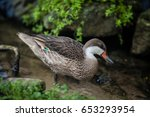 duck standing in a pond on a... | Shutterstock . vector #653293954
