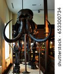 Small photo of Mammoth Skeleton at Royal Belgian Institute of Natural Sciences October 2016, Brussels