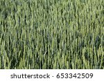 green wheat field on sunny day  ... | Shutterstock . vector #653342509