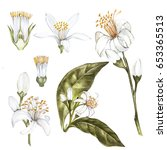 set of hand drawn watercolor... | Shutterstock . vector #653365513