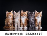 Stock photo five cute maine coon kittens are sitting together 653366614