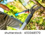 Garden Tree Branches Cut by Cutting Tool. Gardener at Work. - stock photo