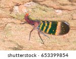 Small photo of Closeup Lanternfly ( Pyrops karenia ) on tree in nature