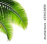 tropical palm leaf isolated on... | Shutterstock . vector #653415850