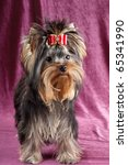 yorkshire terrier puppy on a...   Shutterstock . vector #65341990