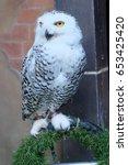 Stock photo white owl 653425420