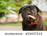 super rich pug dog. funny pug... | Shutterstock . vector #653437213