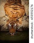 tiger in the nature habitat.... | Shutterstock . vector #653552176