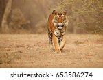 tiger in the nature habitat.... | Shutterstock . vector #653586274