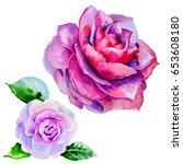 wildflower peony flower in a... | Shutterstock . vector #653608180