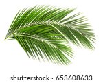 palm leaf for your design.... | Shutterstock . vector #653608633