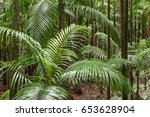 Small photo of King Alexander palm trees growing in tropical rainforest