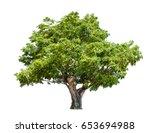 Isolated Big Tree On White...