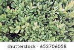 leaves background | Shutterstock . vector #653706058