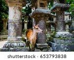 kasuga grand shrine  nara  japan   Shutterstock . vector #653793838