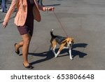 Small photo of American Foxhound on a leash