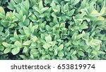 green leaves | Shutterstock . vector #653819974