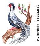 Silver Pheasant. Bird...