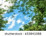 Blue Sky With Treetop