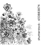 cosmos flowers hand drawing.... | Shutterstock .eps vector #653883874