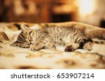 kitten is sleeping on soft... | Shutterstock . vector #653907214