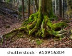 surreal fairy tale fine art...   Shutterstock . vector #653916304