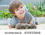 little boy playing with hedgehog | Shutterstock . vector #653925868