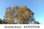 tree | Shutterstock . vector #653929438
