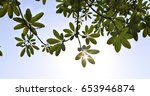 leaves with sky  thailand | Shutterstock . vector #653946874