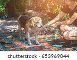 cute beagle puppy dog taking a...   Shutterstock . vector #653969044