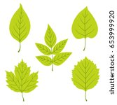 collection of green leaves.... | Shutterstock .eps vector #653999920