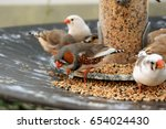 zebra finches eating seed | Shutterstock . vector #654024430