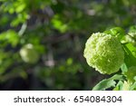 white hydrangea flower closeup | Shutterstock . vector #654084304