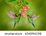 Two hummingbirds with pink...
