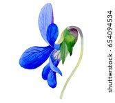 Wildflower Viola Papilionacea...