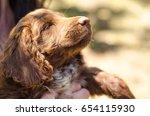 red puppy dog cocker spaniel... | Shutterstock . vector #654115930