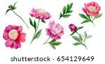 wildflower peony flower in a... | Shutterstock . vector #654129649